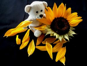 Sunflowers and Teddy Bear