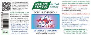 coleus_forskholii_web